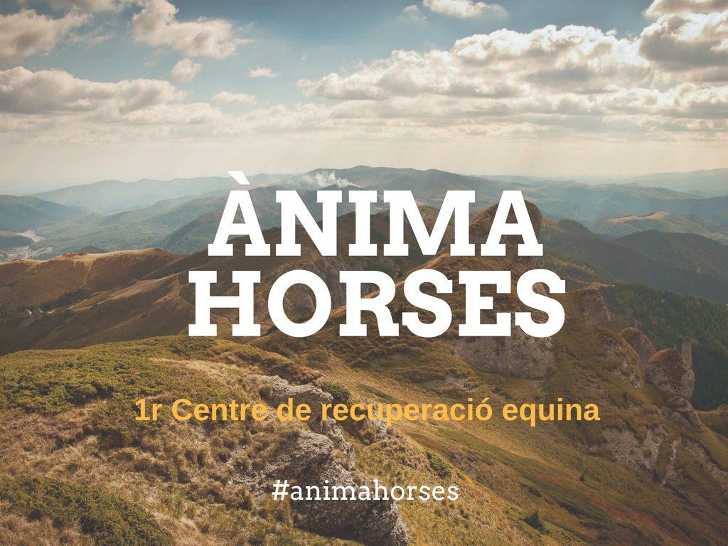 Curs d'equitació