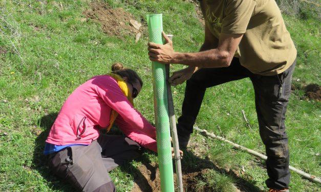 Visita a la plantació d'arbres fruiters per a la millora d'habitat per a l'ós bru